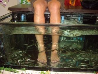 рыбный спа педикюр